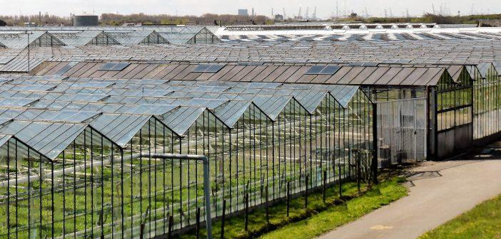 Schaalvergroting groententeelt in glastuinbouw